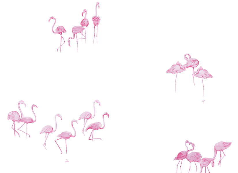 ohmywall-papier-peint-flamants-roses-fond-blanc-panoramique-zoom.jpg