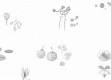 Papier peint Mirabilia Florum Noir et Blanc Medium