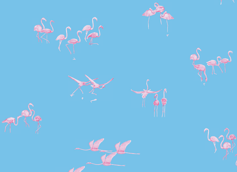 ohmywall-papier-peint-flamants-roses-fond-bleu-medium-zoom.jpg