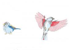 Papier peint Les Oiseaux de Pierrot en couleur Panoramique