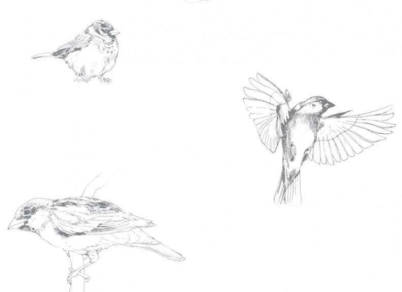 Papier peint Les Oiseaux de Pierrot Gris panoramique