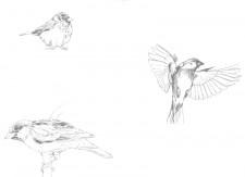 Papier peint Les Oiseaux de Pierrot Gris Medium
