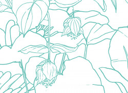 Papier peint Jungle Tropical Vert Turquoise Déco Lé Unique